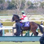 [子供とお出かけ]阪神競馬場を子供と10倍楽しむ方法!